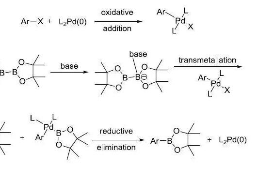 Miyaura硼酸化反应