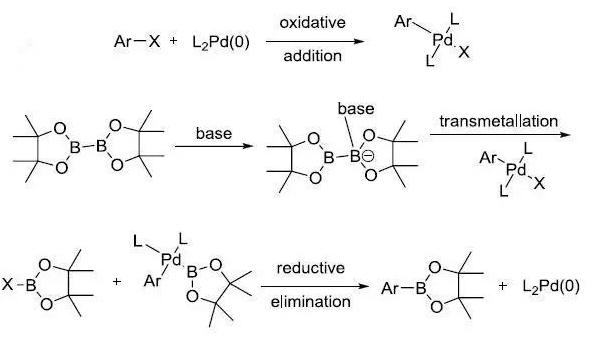 Miyaura硼酸化