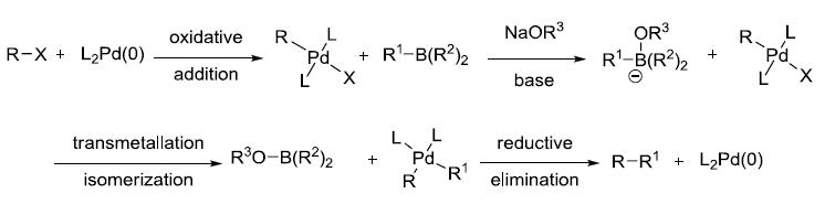 Suzuki–Miyaura反应