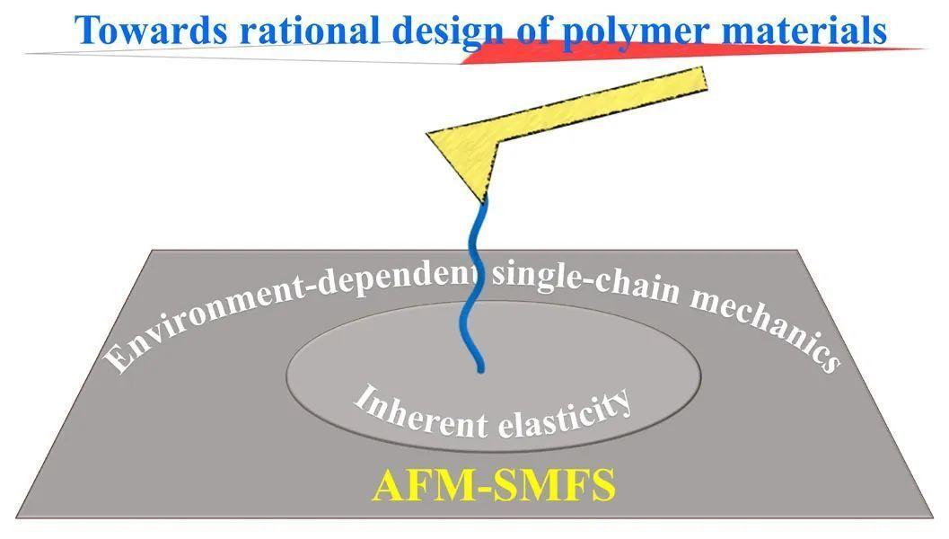 西南交通大学崔树勋教授《Chem. Soc. Rev.》:利用单分子力谱研究高分子单链弹性的环境响应