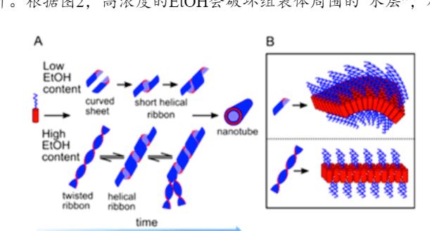 JACS|有机溶剂对于具有α螺旋疏水链段的两亲性聚多肽自组装过程的影响