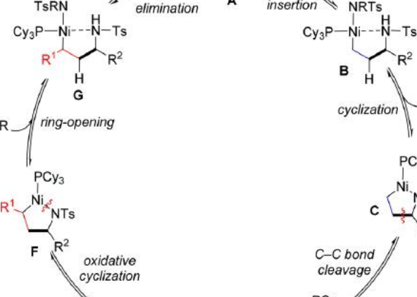JACS:南开周其林院士课题组开发镍催化烯基交换合成丙烯胺新方法