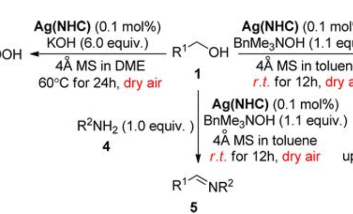常见的金属氮杂环卡宾催化剂