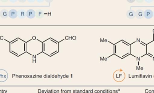 Nature Chemistry | 利用光氧化还原剂位点选择性催化蛋白质酪氨酸生物偶联