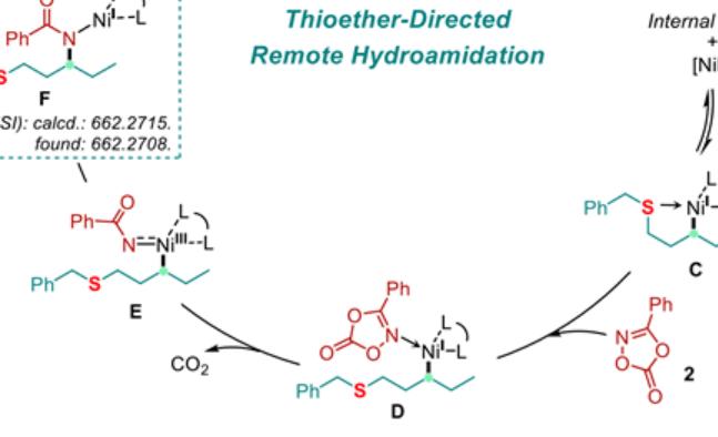 【J. Am. Chem. Soc.】硫醚导向Ni-H催化γ-C(sp3)-H的分子间酰胺化